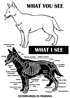 you see, What I see. I see a big fwuffy puppy dog that needs belly rubs and lots of pats!What you see, What I see. I see a big fwuffy puppy dog that needs belly rubs and lots of pats! Vet Tech Student, Student Studying, Dog Anatomy, Vet Assistant, Pet Vet, Vet Clinics, Animal Science, Veterinary Technician, Veterinary Memes