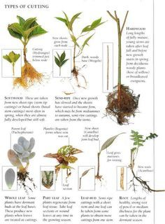 All Cutting Types and Additional Process photos. Excellent info. #plants