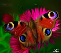 ps-pictureshop: Schmetterling, mariposa, butterfly, fluture, papil...