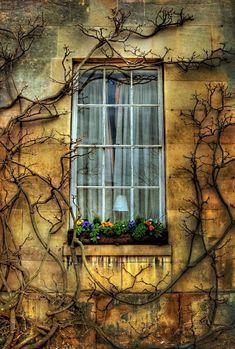 "enchantedengland:  "" secret-garden-of-gem: Window (Cambridge University)  enchantedengland: I have found an unimaginable number of beautiful blogs tonight while on amarauderinrye; but this secret-garden-of-gem actually induced my lazy ass to log off..."