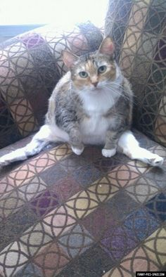 Cat Just Chills