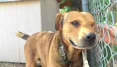 Dog chained up for a decade has the sweetest reaction to being set free. For the love of animals. Pass it on.