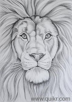 Gallery for > sketches of landscapes landscape pencil drawings, pencil art drawings, drawing sketches Realistic Animal Drawings, Pencil Drawings Of Animals, Cool Art Drawings, Animal Sketches, Art Drawings Sketches, Lion Face Drawing, Lion King Drawings, Lion Sketch, Lion Pictures
