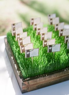 grass escort card display - florist was right that the cards can be uneven on these type of displays but that's if you use a tent card - if you actually stick them in like this, then you can still create straight lines.