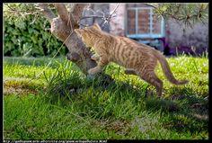 fotografie e altro...: Gatto - HDR - photographic processing (136)