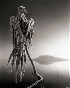 Photographer Nick Brandt took photos of the birds that die in the deadly Lake Natron in northern Tanzania. The alkalinity levels are so high in the lake it causes the animals to turn into statues, preserving them forever. Nick Brandt, Tanzania, Turn To Stone, Seen, Macabre, Dark Art, White Photography, Transformers, Stone Statues