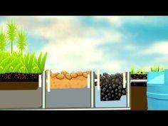 Descubre como funcionan los humedales - YouTube