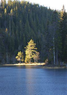 November light by randihausken, via Flickr