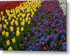 Keukenhof Colorful Floral Ribbons Metal Print by Jenny Rainbow. All metal prints are professionally printed, packaged, and shipped within 3 - 4 business days and delivered ready-to-hang on your wall. Choose from multiple sizes and mounting options. Beautiful Flowers Garden, All Flowers, Spring Flowers, Wall Prints, Fine Art Prints, Floral Ribbon, Botanical Gardens, Fine Art Photography, Home Art