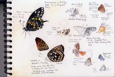 art journal by artist-naturalist, Mike (from Flickr)