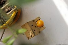 Danbo has finally caught his lunch...