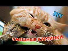 Забавные животные #5 ∙ Приколы про животных 2015 ∙ Funny Video Compilati...