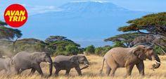 Puesto 5: disfrutá el amanecer desde la cima del Monte Kilimanjaro, los días de caminata valen la pena para vivir este momento único. ¿Sabías qué en la cima de la montaña existe un pequeño libro en una caja de madera, donde casi todos los escaladores que hacen cumbre ha escrito sus pensamientos sobre la aventura?   #Avantrip #Tanzania #Kilimanjaro #Viajar #Viaje #Turismo #Mundo #Travel #Maravillas