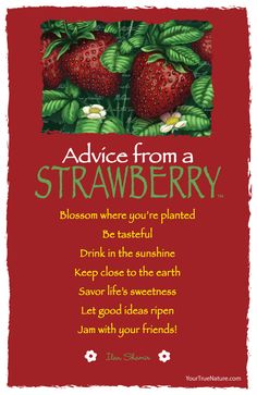 Advice from a Strawberry - Postcard - Your True Nature