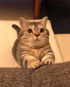 Outstanding Cat pics tips are available on our internet site. Read more and you wont be sorry you did. Cute Cats And Kittens, I Love Cats, Kittens Cutest, Cute Baby Animals, Funny Animals, Gatos Cats, Kawaii Cat, Cute Creatures, Funny Animal Pictures