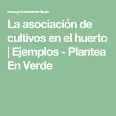 La asociación de cultivos en el huerto | Ejemplos - Plantea En Verde
