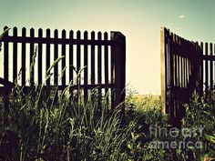 Fence Print By Dan Radi