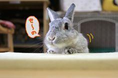 11-03-04-03.jpg