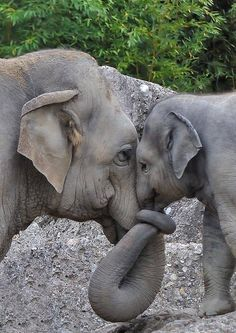 Wild baby animals ~ Stunning nature Best Picture For Cute animals real For Your Taste You are looking for something, Cute Baby Animals, Animals And Pets, Funny Animals, Mother And Baby Animals, Mother And Baby Elephant, Nature Animals, Animals With Their Babies, Animals In The Wild, Wild Life Animals