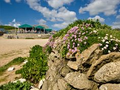 Hive Beach Cafe, Dorset's best seafood cafe