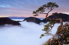 tatra mountains, border between slovakia and poland. High Tatras, Tatra Mountains, Mountain Range, Mother Nature, Poland, Natural Beauty, Earth, River, World