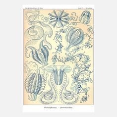 Adam's Ale Art Prints embraces a love of scientific illustration. Picking and choosing book pages and prints from the last 200 years