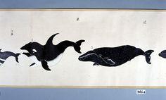 児鯨 鯱 拡大