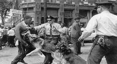 Police, dogs and man during the civil rights movement, 1964.