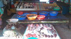 Kerala fishes