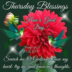 Thursday Blessings, Have a Great Day good morning thursday thursday quotes good morning quotes happy thursday thursday quote good morning thursday thursday blessings happy thursday quote thursday blessings quotes Funny Thursday Images, Good Morning Thursday Images, Happy Thursday Morning, Happy Thursday Quotes, Good Thursday, Thankful Thursday, Monday Images, Sunday, Monday Blessings