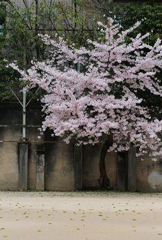 Kyoto, Japan 京都芸術センター(明倫小学校) (Photo : Gallery I) https://www.facebook.com/Kyoto.GalleryI