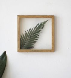 Pressed Fern Leaves, Plant Lovers Gift Idea MyBotanicaStore - from Etsy Framed Leaves, Pressed Leaves, Gift For Lover, Lovers Gift, Pressed Flower Art, Plant Art, Leaf Art, Flower Frame, Plant Holders