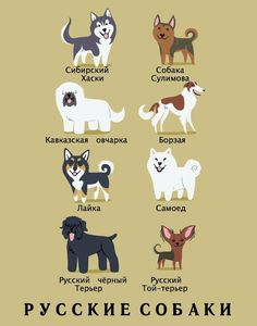 russian-dogs-illustration-by-lili-chin - Dog Milk Russian Dog Breeds, Russian Dogs, Terrier Noir Russe, Black Russian Terrier, Dog Milk, Cute Poster, Dog Illustration, Dogs Of The World, Dog Art