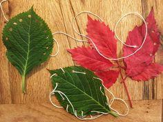 Ta nejlepší domácí plastelína a vzdělávací aktivita, kterou děti milují Plant Leaves, Plants, Plant, Planets