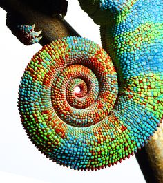 Mark Laita.  Almost thought this was man made with beads..Beautifully detailed and colorful.