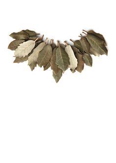 kermes oak leaves (mary jo hoffman)