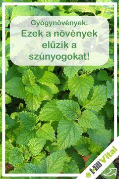 Vitamin B12, Herbs, Garden, Decor, Drive Way, Varicose Veins, Health And Beauty, Garten, Decoration