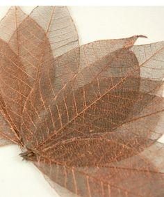 """Natural 3"""" Copper Metallic Rubber Tree Skeleton Leaves  (10 leaves/pkg) $4.99 pkg/ 3 pkgs for $4.19 pkg"""