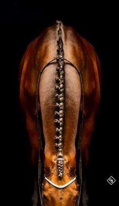 Dressage horse love it! All The Pretty Horses, Beautiful Horses, Animals Beautiful, Beautiful Braids, Pretty Braids, Horse Photos, Horse Pictures, Horse Braiding, Horse Mane Braids
