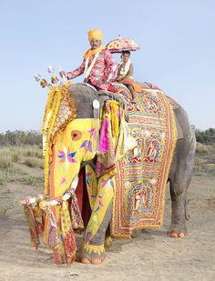 French photographer Charles Freger captured these stunning images during the Elephant Festival in Jaipur, India. Indian Elephant, Elephant Love, Elephant Art, Colorful Elephant, Beautiful Creatures, Animals Beautiful, Cute Animals, Party Animals, Charles Freger