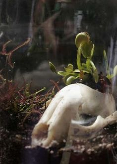 Definitely using the bones idea - Carnivorous Plant Terrarium