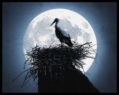 ~ Full Moon ~