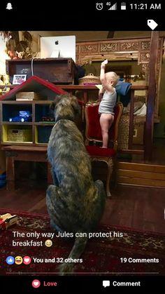 Billy the Irish Wolfhound, aged seven months.