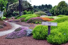 Visit The Mendocino Coast Botanical Gardens In Northern California Mendocino California, California Backyard, Mendocino Coast, California Travel, Northern California, California Native Landscape, Adventure Is Out There, Native Plants