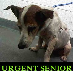 SAFE --❤️❤️- JADE (A1714462) I am a female white and brown Terrier mix. The shelter staff think I am about 10 years old and I weigh 12 pounds. I was found as a stray and I may be available for adoption on 08/02/2015. — Miami Dade County Animal Services. https://www.facebook.com/urgentdogsofmiami/photos/pb.191859757515102.-2207520000.1438104555./1018545821513154/?type=3&theater