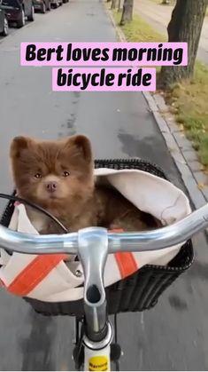 Baby Animals Super Cute, Cute Little Animals, Cute Funny Animals, Funny Dogs, Cute Dogs And Puppies, Baby Puppies, I Love Dogs, Doggies, Cute Animal Videos