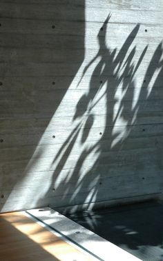Concrete wall as canvas for the play of light and shadow. The Sunset Vale House by Wow Architects,