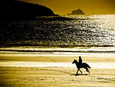 longing for a canter along the beach... note to self: get beach. also get horse.