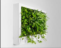 green wall plant painting