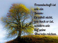 A amizade é como uma árvore: não importa o quão alta ela é, mas como as suas raízes profundas chegam.